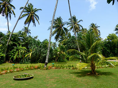 gardens at Surf School Sri Lanka